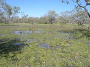 As the Dry intensifies this marsh will retreat until the rains return